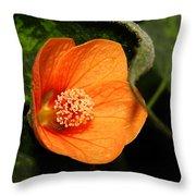 Flowering Maple Singe Flower Throw Pillow