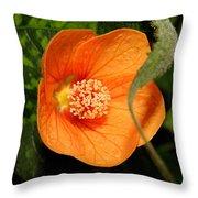 Flowering Maple Single Flower 2 Throw Pillow