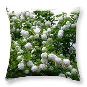 Flowering Snowball Shrub Throw Pillow