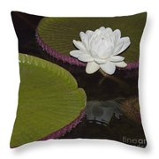 Victoria Amazonica White Flower Throw Pillow