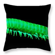 Fluorescent Millipede Throw Pillow