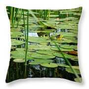 Fly Beware Throw Pillow