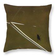 Fly N Crack Throw Pillow