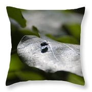 Fly On A Green Leaf Throw Pillow