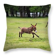 Flying Abbey Throw Pillow