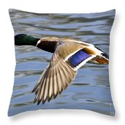 Flying Duck Throw Pillow