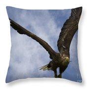 Flying European Sea Eagle I Throw Pillow