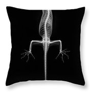 Flying Gecko X-ray Throw Pillow