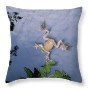Foam Nest Tree Frog Polypedates Dennysi Throw Pillow by Mark Moffett