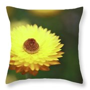 Focal Point Throw Pillow