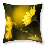 Focos De Luz Throw Pillow