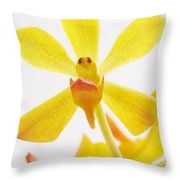 Focus Throw Pillow by Atiketta Sangasaeng