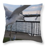 Focused Gull Throw Pillow