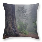 Fog And Redwoods Throw Pillow