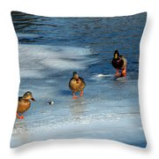 Follow The Leader Duck Style Throw Pillow