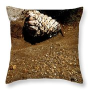 Fools Gold And Pine Cone Throw Pillow