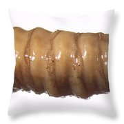 Forensic Helpers, Black Blow Fly Maggot Throw Pillow