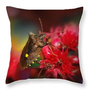 Forest Bug - Pentatoma Rufipes Throw Pillow