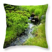 Forest Creek In Newfoundland Throw Pillow