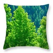 Forest Illuminates In The Sunlight  Throw Pillow