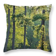 Forest Illumination At Sunset Throw Pillow