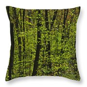 Forest In Spring Foliage, Six Mile Lake Throw Pillow