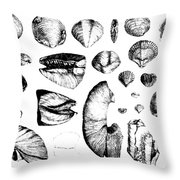 Fossilized Shells, 1844 Throw Pillow