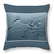 Fossils - Pterosaurs Throw Pillow