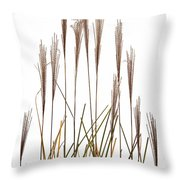 Fountain Grass In White Throw Pillow by Steve Gadomski