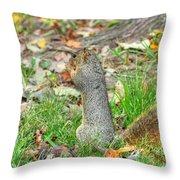 Fox Squirrel Eating Nut Throw Pillow