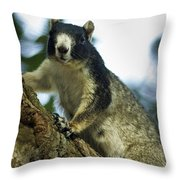 Fox Squirrel Throw Pillow by Phill Doherty