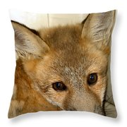 Foxy Broad Throw Pillow