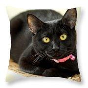 Fragile Mimi Throw Pillow