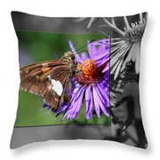 Framed Butterfly Throw Pillow