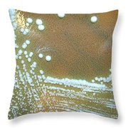 Francisella Tularensis Culture Throw Pillow