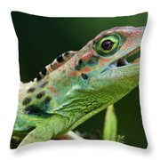 Frasers Anole Anolis Fraseri Male Throw Pillow