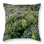 Fresh Broccoli Throw Pillow by Susan Herber
