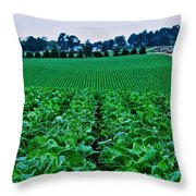 Fresh Cabbage Throw Pillow