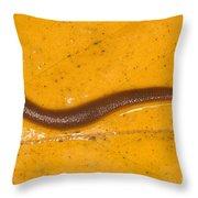 Freshwater Leech Hirudo Sp Throw Pillow