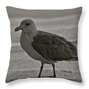 Friendly Gull Throw Pillow