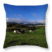 Friesian Cattle, Allihies, Co Cork Throw Pillow