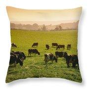 Friesian Cattle Cattle Grazing Throw Pillow