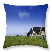 Friesian Cow Grazing In A Field Throw Pillow