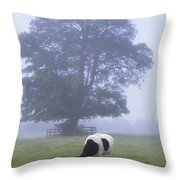 Friesian Cow, Ireland Throw Pillow