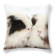Frizzy Alpaca Guinea Pigs Throw Pillow