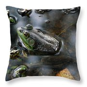 Frog In The Millpond Throw Pillow