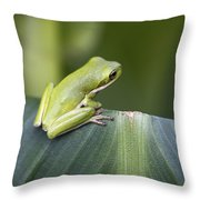 Froggie On A Leaf Throw Pillow