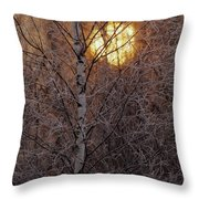 Frost-covered White Birch Trees Throw Pillow