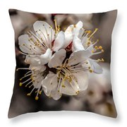 Fruit Bouquet Throw Pillow