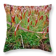 Fruiting Moss - Red And Green Tableau Throw Pillow